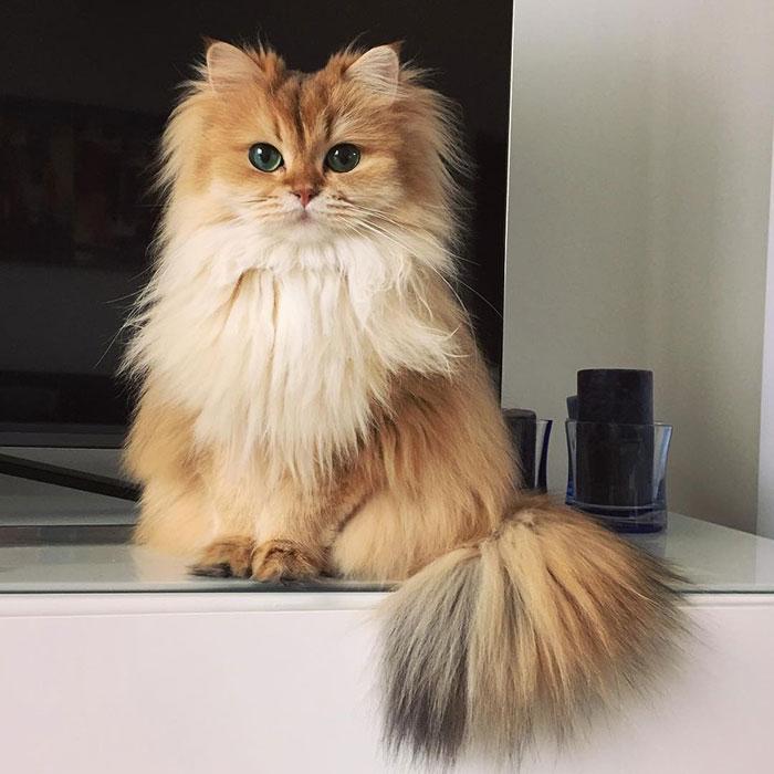 gato-mais-bonito-da-internet-bluebus4