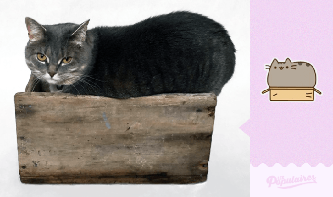 pusheen-the-cat-real-life2
