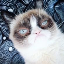 grumpy-cat-broadway-cats