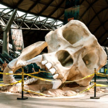 kong_skull_island_skull_1