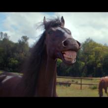 volkswagen-tiguan-laughing-horses-bluebus