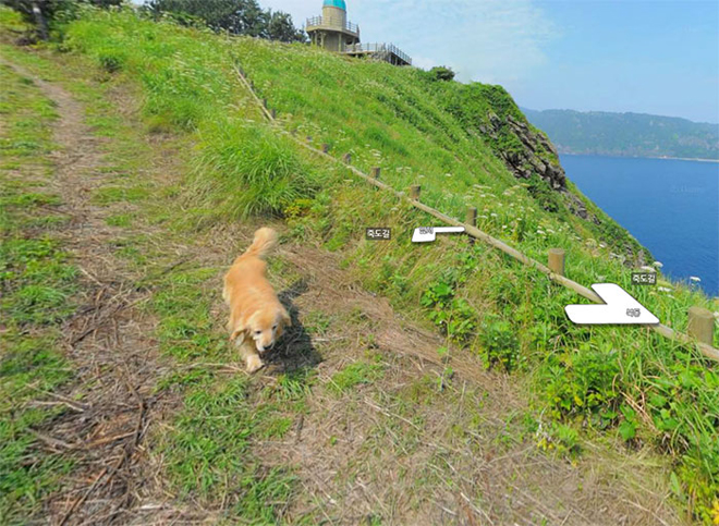 cachorro-segue-fotografo-street-view1