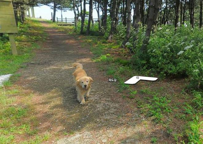 cachorro-segue-fotografo-street-view2