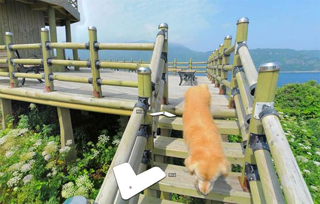 cachorro-segue-fotografo-street-view4