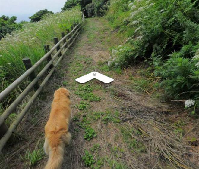 cachorro-segue-fotografo-street-view6