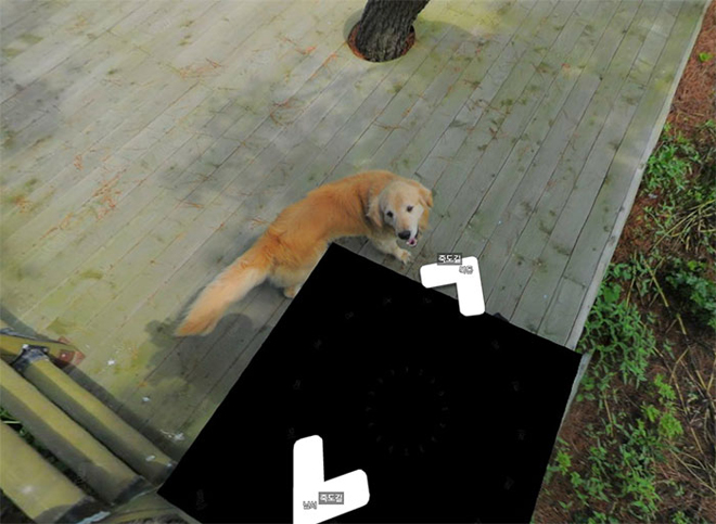 cachorro-segue-fotografo-street-view8
