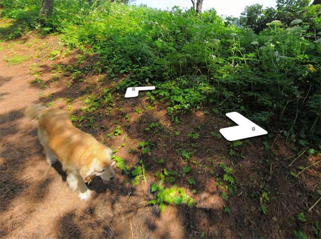 cachorro-segue-fotografo-street-view9