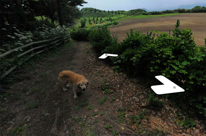 cachorro-segue-fotografo-street-view10