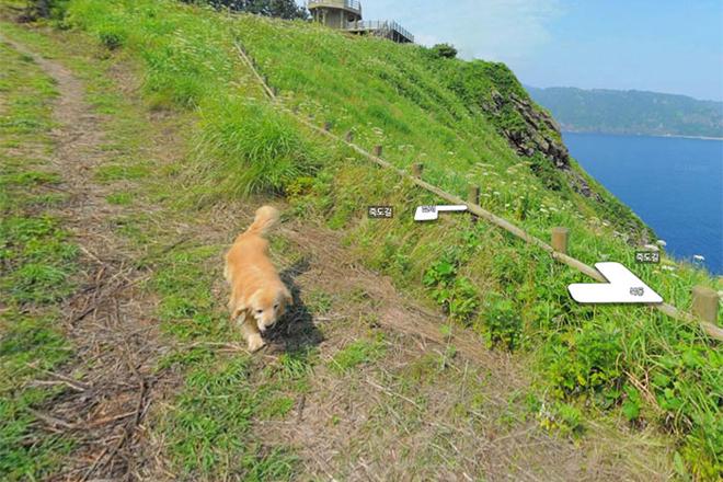 cachorro-segue-fotografo-street-view-bluebus