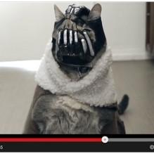 1 vídeo mostra a versao felina do vilao Bane – forte e ameaçador  -) deddd8f5e2